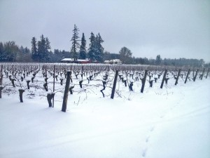 Vineyard in snow