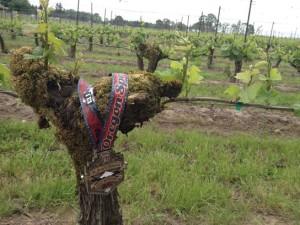 marathon medal in vine